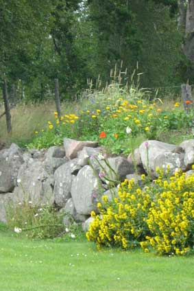 stone wall (summer)